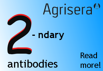 Agrisera high quality secondary antibodies