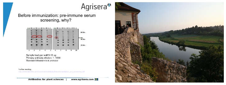 Agrisera Western blot seminars in Poalnd