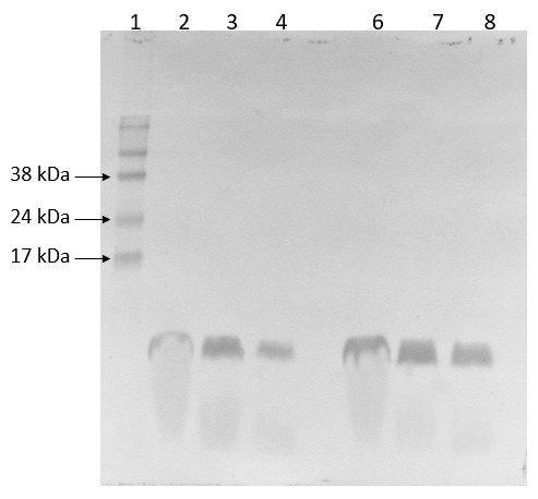 Western blot using anti-PsbE antibodies
