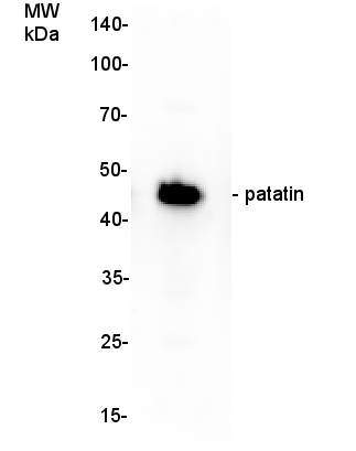 western blot detection using anti-patatin antibody