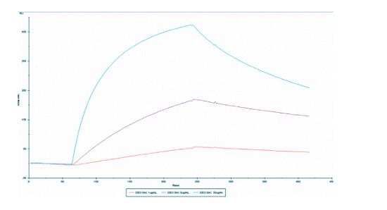 Surface plasmon resonance (SPR) with monoclonal antibody to 5-mC (5-methylcystosine)