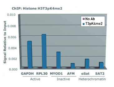 ChIP using H3T3pK4me2 antibodies