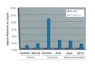 ChIP using anti-Methylated Histone H3 at Lys9 (K9)  antibodies