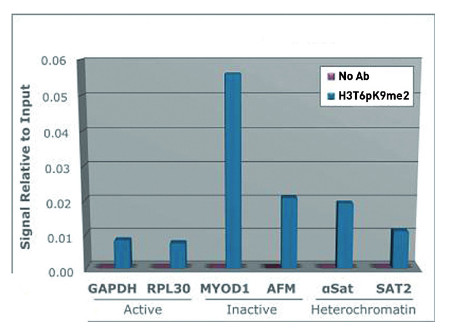 ChIP using anti-H3T6pK9me2 | Histone H3 (dimethyl Lys9, p Thr6)  polyclonal antibodies