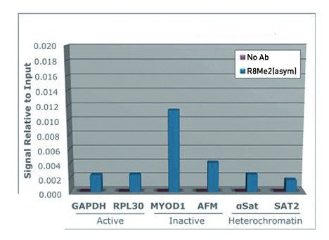 ChiP using anti-H3R8me2(asym) | Histone H3 (asym-dimethyl Arg8) polyclonal antibodies