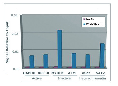 ChIP using anti-H3R8me2(sym) | H3 (sym-dimethyl Arg8) polyclonal antibodies