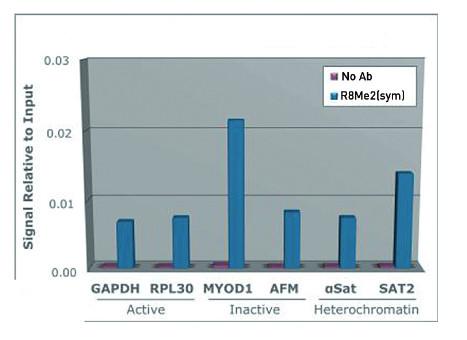 ChIP using anti-H3R8me2(sym) | H3 (sym-dimethyl Arg8) polyclonal antibodies