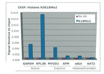 ChIP using anti-H3K18me2 | Histone H3 (dimethyl Lys18) polyclonal antibodies