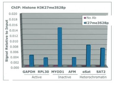 ChIP using anti-H3K27me3S28p | Histone H3 (trimethylated Lys27, p Ser28)  polyclonal antibodies