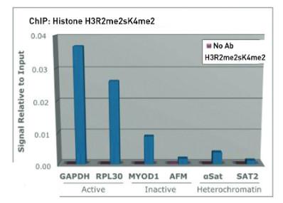 ChIP using anti-H3R2me2(sym)K4me2 | Histone H3 (sym-dimethylated Arg2, dimethyl Lys4) polyclonal antibodies