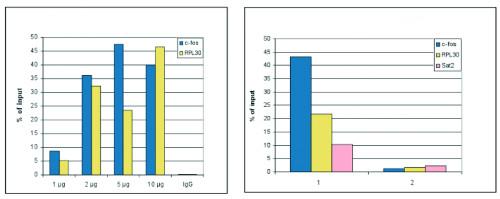 ChIP using anti-H3S10p | Histone H3 (p Ser10) polyclonal antibodies