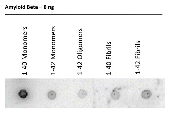 Dot blot using anti-Amyloid beta 18-30 antibodies