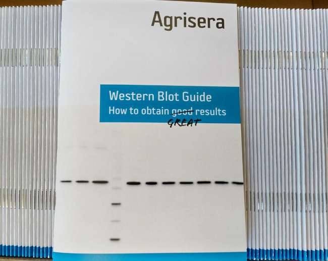 Agrisera's Western Blot Trouble Shooting Guide
