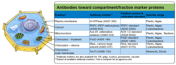 Agrisera compartment marker antibodies