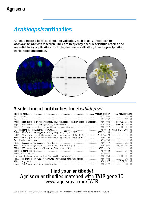 Arabidopsis flyer