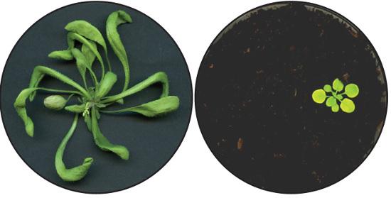 Agrisera Developmental Biology Antibody Collection