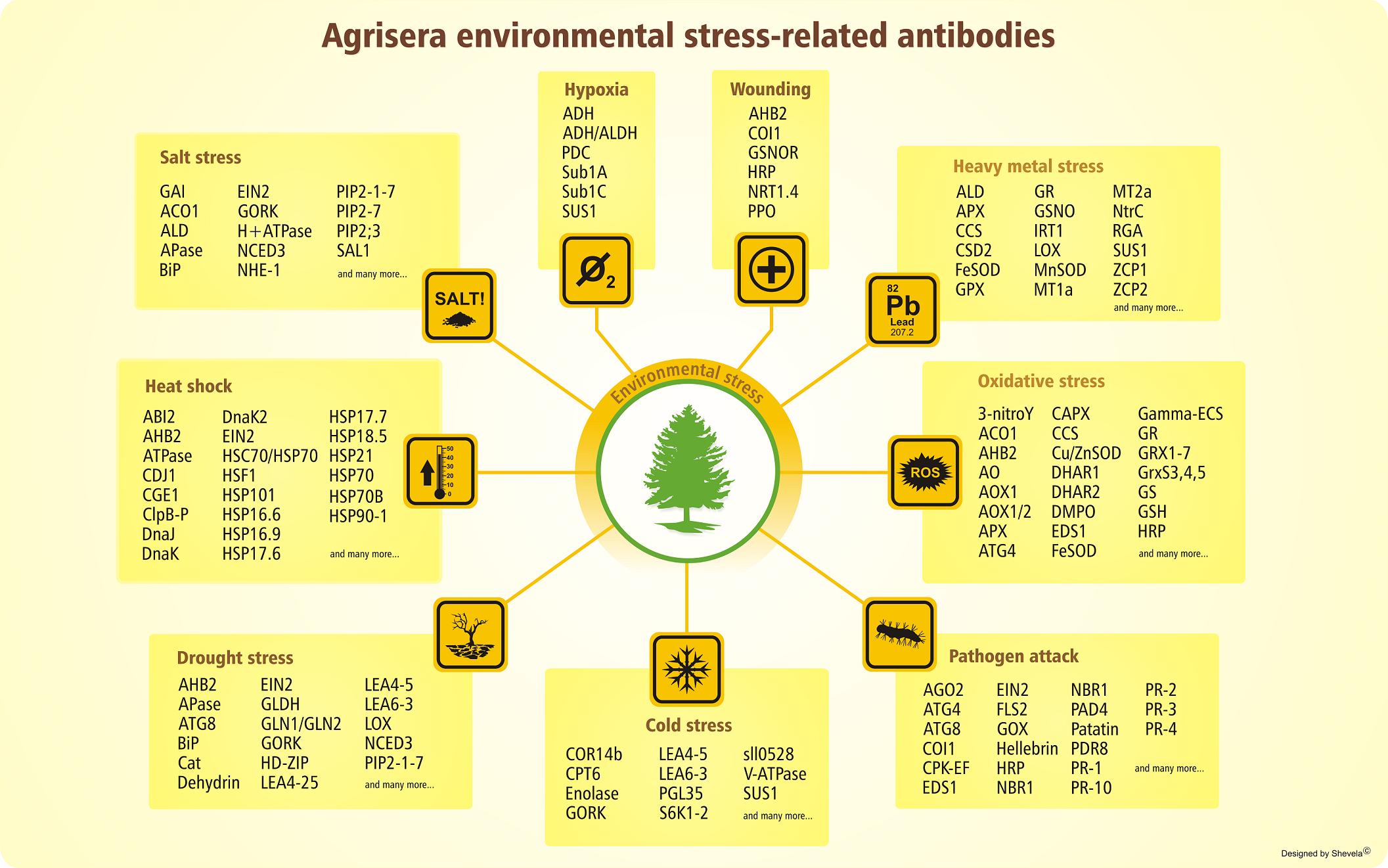 Environmental stress antibodies