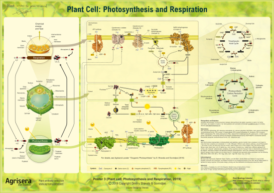 Photosynthesis and respiration educational poster of Agrisera