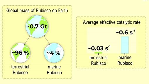 Rubisco Amount on Earth