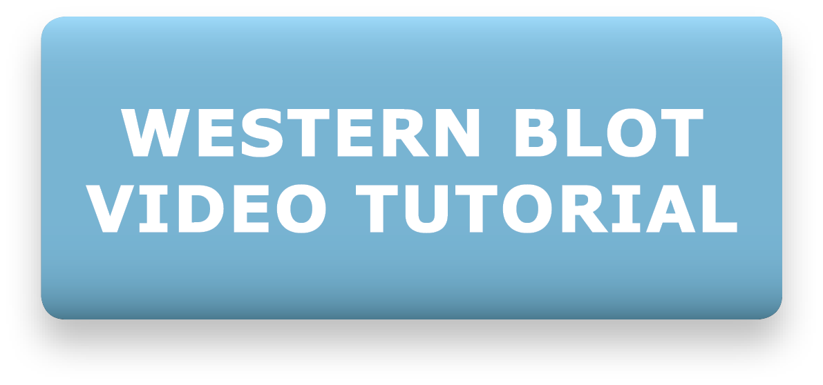 Agrisera Video Tutorial - Western Blot Recommendations & Troubleshooting