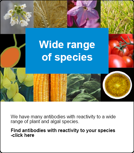 Antibodies available to a wide range of species!