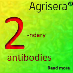 Agrisera secondary antibodies