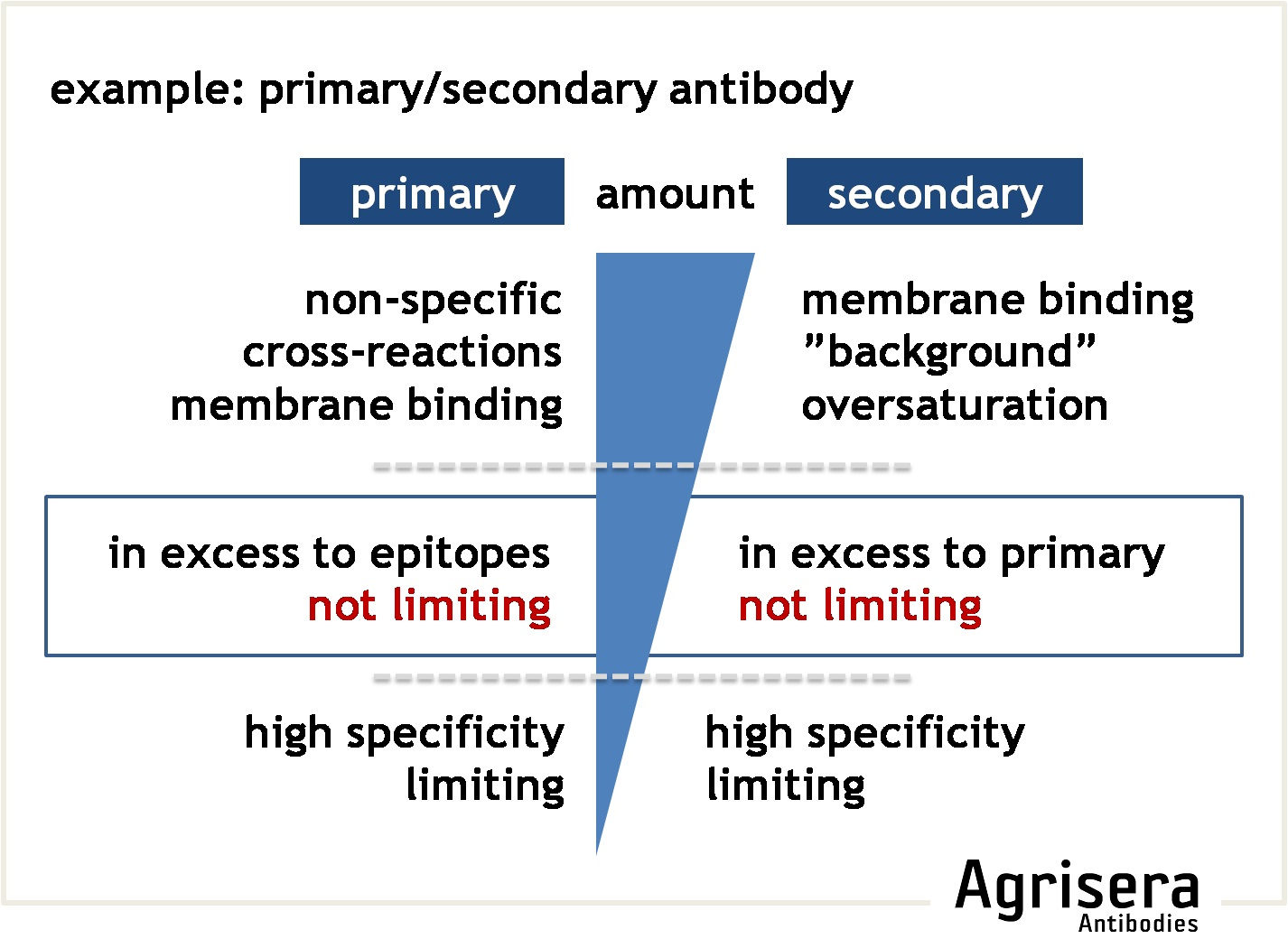 optimization of primary and secondary antibody amount