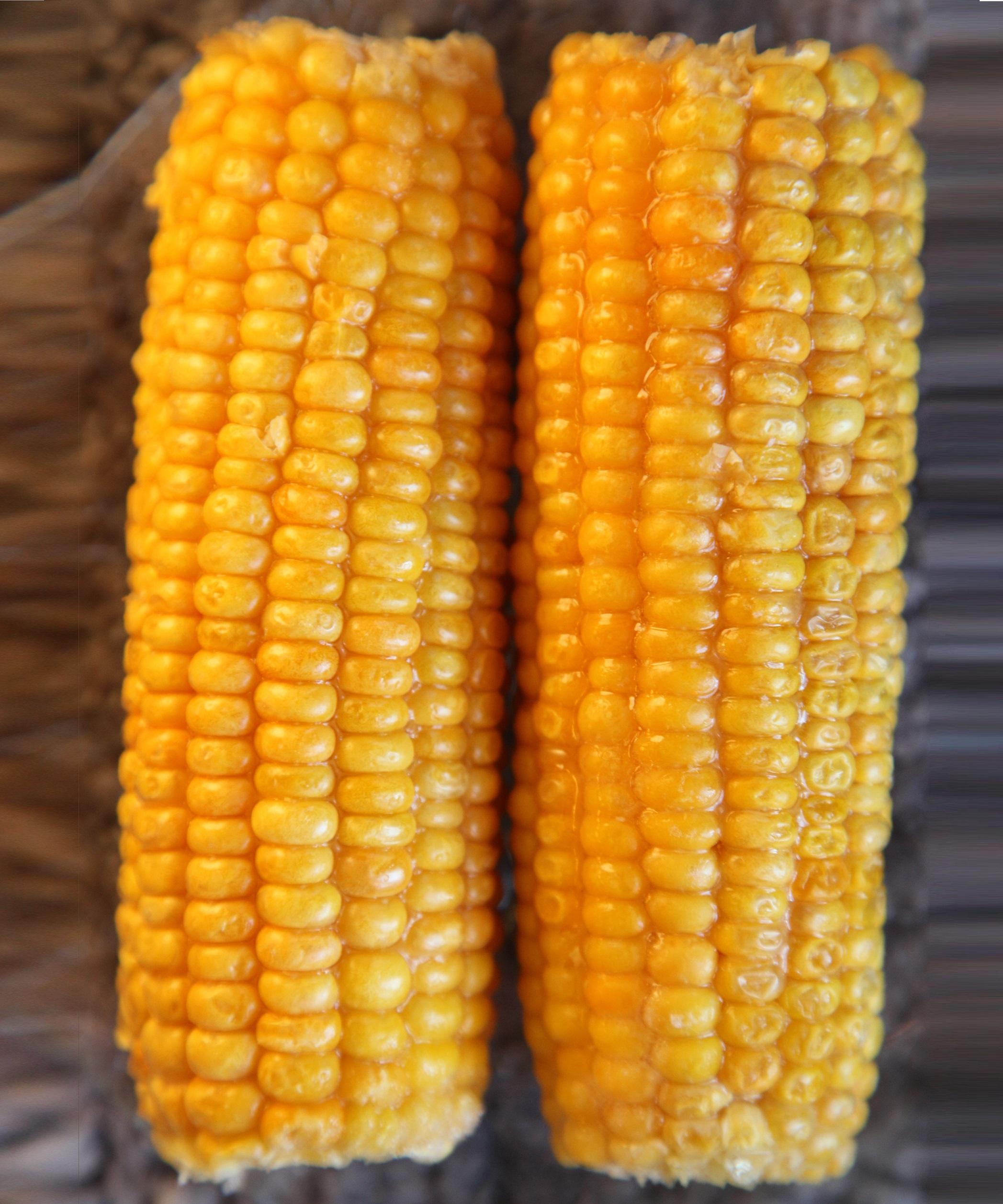 Maize - Agrisera antibodies