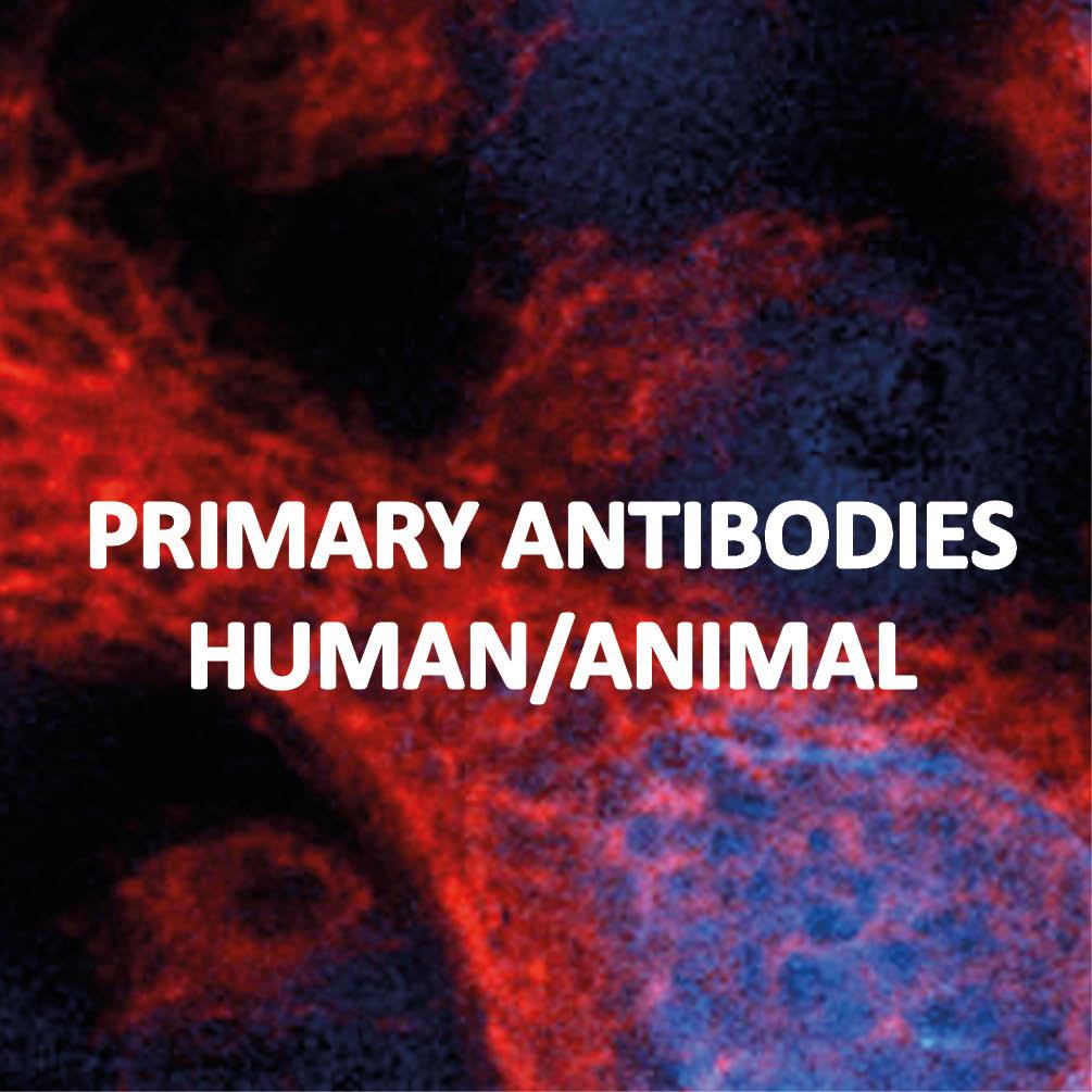 Primary antibodies, Human/animal