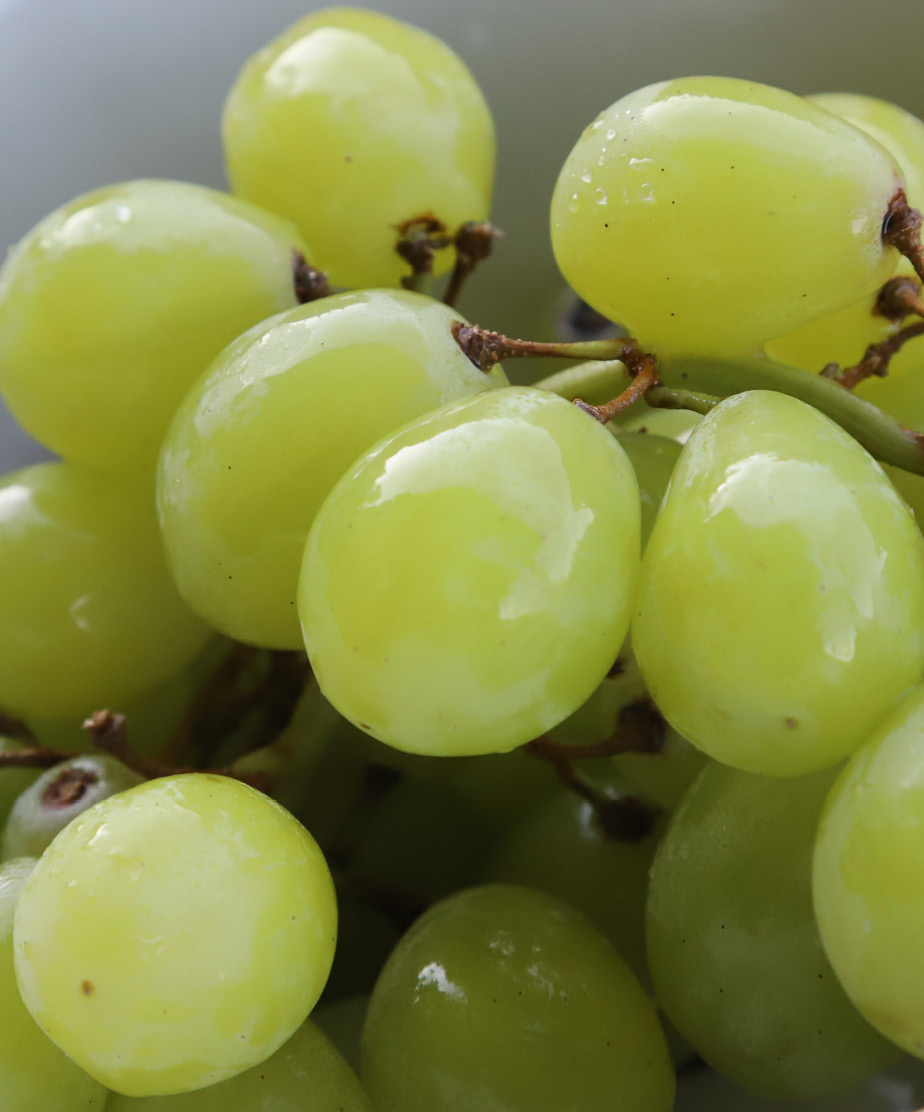 Grape - Agisera antibodies