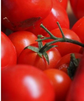 Tomato - Agrisera antibodies