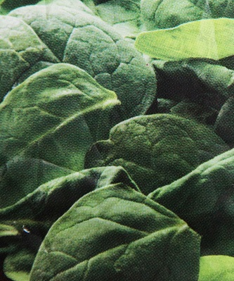 Spinach - Agrisera antibodies