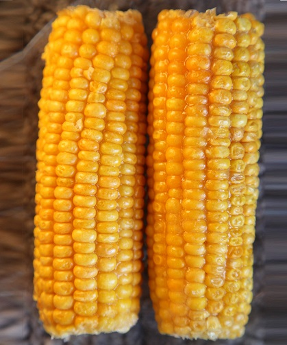 Maize - Agrisera antibodies