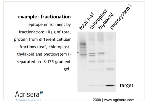 what gives protein fractionation